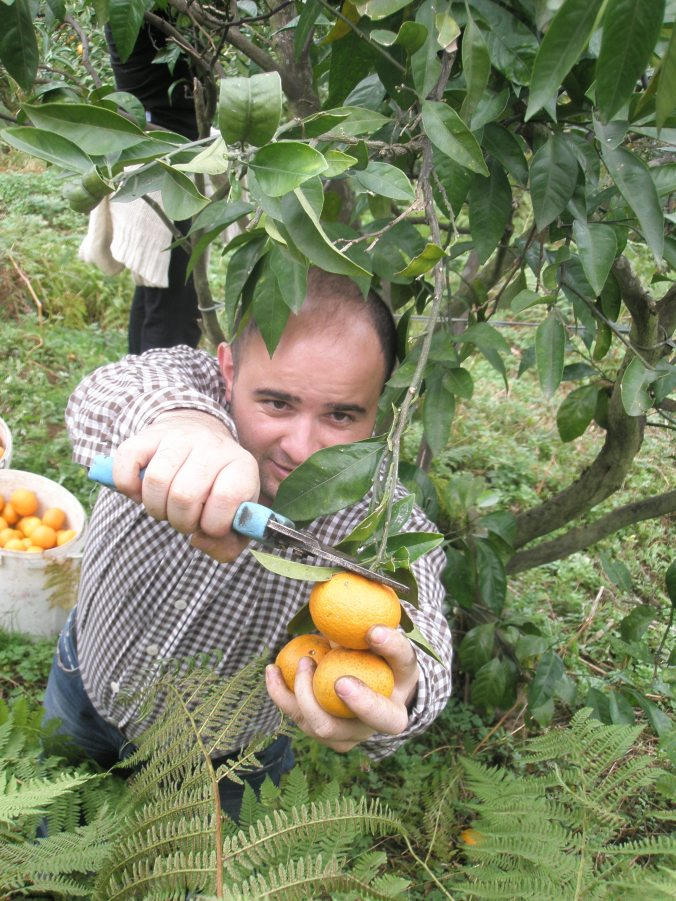 picking tangerines at a family orchard overlooking Batumi